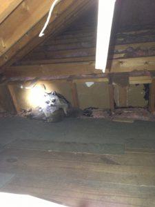 pest in the attic