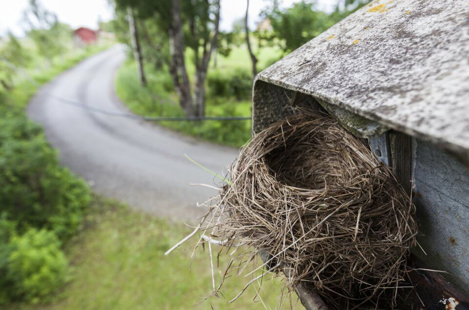 wild bird nest in home