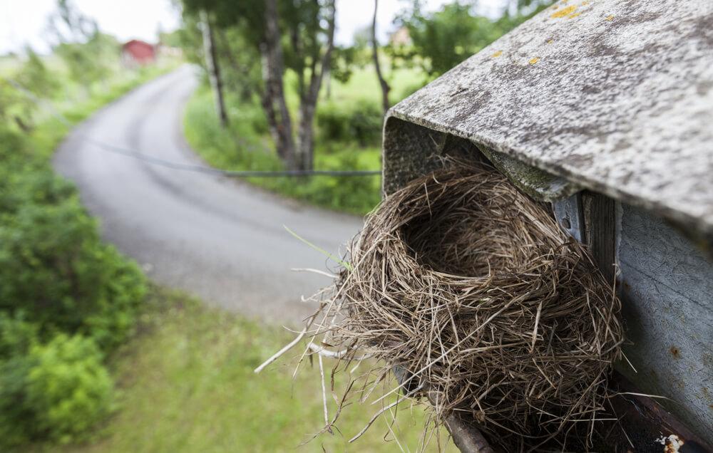 wild bird nest in home