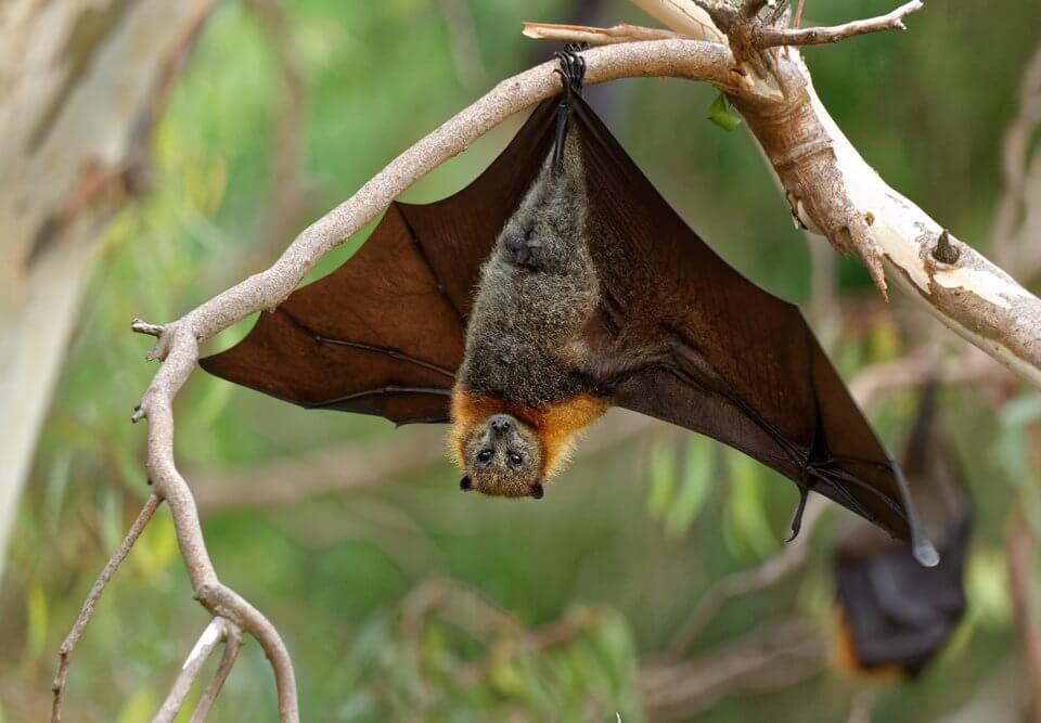 a bat hanging in the tree